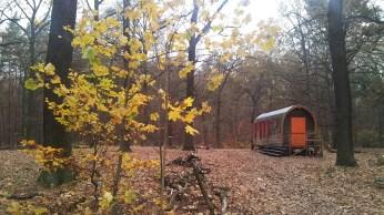 Wagen im Wald