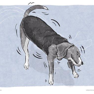 Shake Off – Dog Body Language
