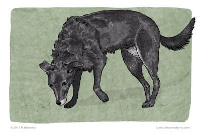 Sniffing the ground – Dog Body Language