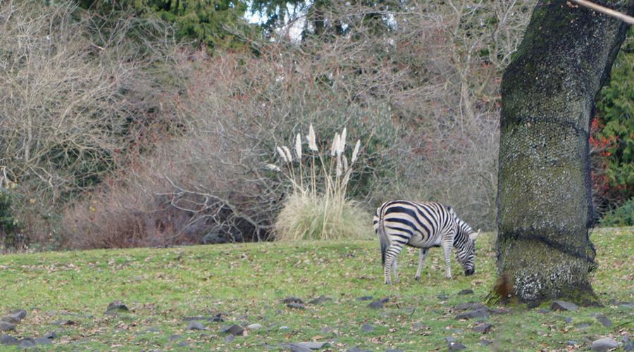 woodland_park_zoo_25