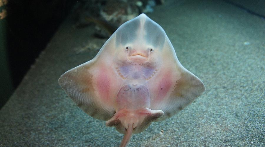 10-seattle-aquarium-smiling-fish