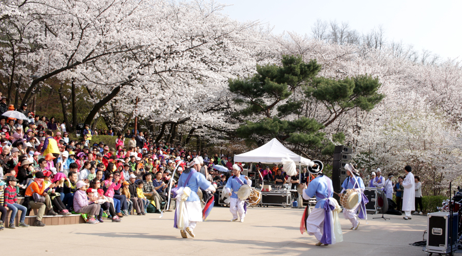 2015-04-11-korea-seoul-ansan-cherry-blossoms-21