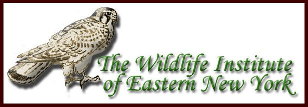 The Wildlife Institue of Eastern New York Logo