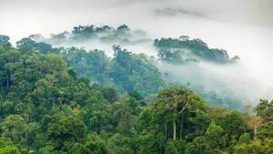 Natural silica-rich artesianwater Sourced from beneath protected Malaysian rainforest