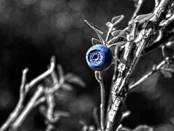 Nature, Macro, Blueberry, Blue Superfood