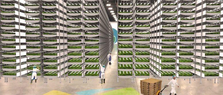 Ninurta Enterprises Vertical farming