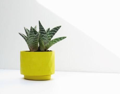 macetero-cactus-polygon