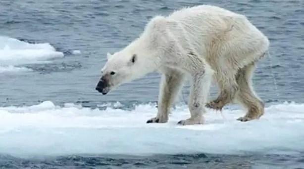 Kumpulan dampak dari Pemanasan Global terhadap manusia