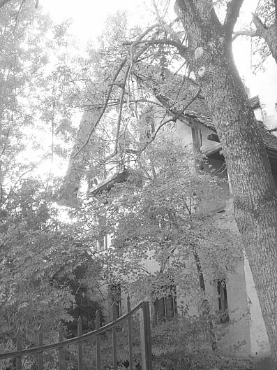 Von diesem Baum verdeckt...
