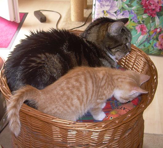 Tiger und Sparrow schließen Freundschaft