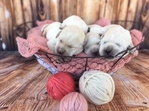 Polar White Labs