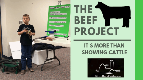The Beef Project: It's More Than Showing Cattle