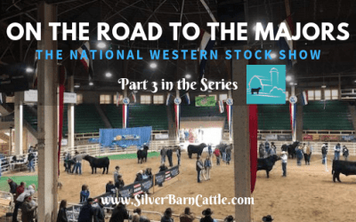 On the Road to the Majors: National Western Stock Show