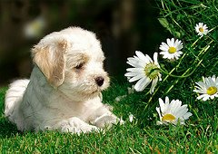 Animal Healing in Merseyside and Cheshire