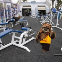 Ewoks at the Gym