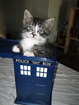 dr_who_cats_2