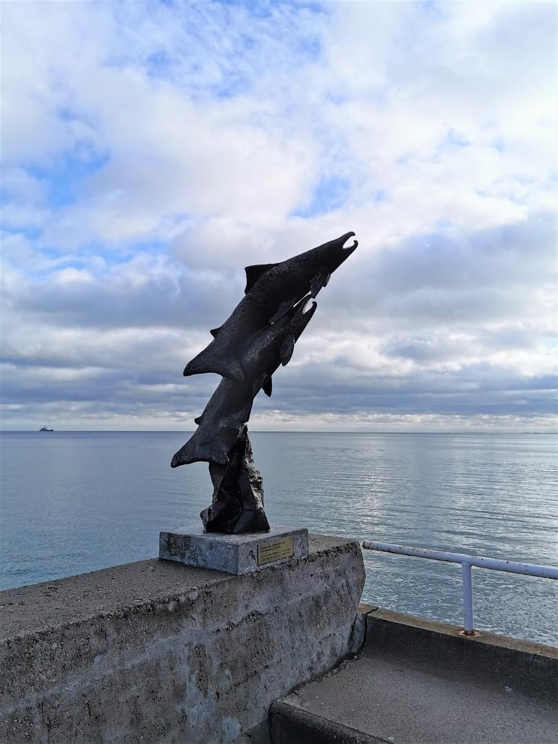 Powrót do domu - łososie przy Bulwarze Nadmorskim w Gdyni