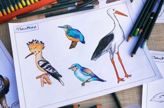 Nowe kolorowanki: zwierzęta chronione