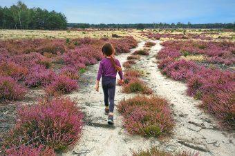 Bory Dolnośląskie. Gdzie są wrzosowiska, pustynia, bagna i najlepszy miód wrzosowy?