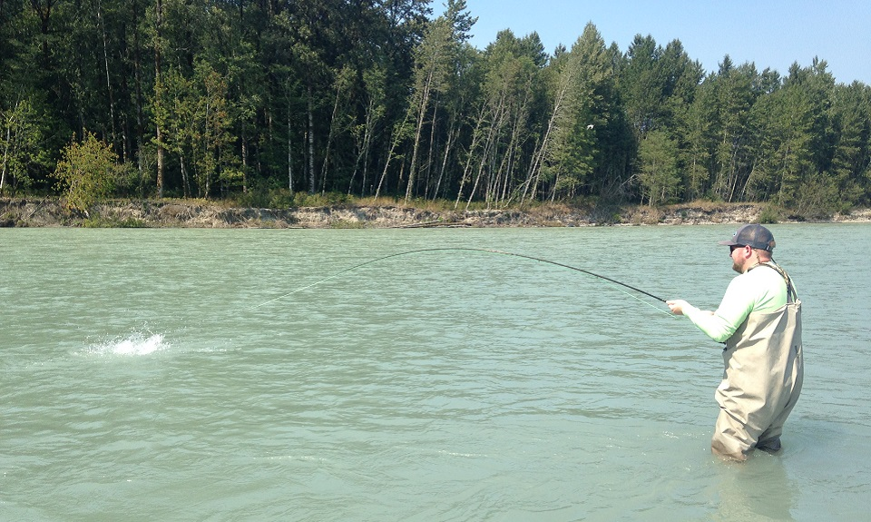 squamish river, fly fishing, pink salmon fly fishing, squamish river fly fishing guides,