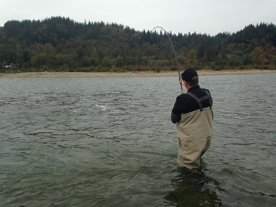 chum salmon,chum salmon fishing, chum salmon fishing bc, chum salmon fishing fraser river