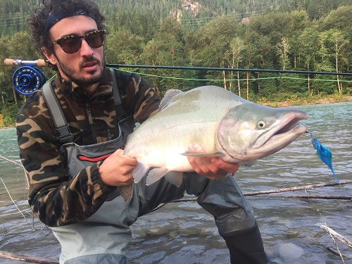 pink salmon, salmon charters vancouver, pink salmon fly fishing, salmon fly fishing, squamish fly fishing, fly fishing guides, squamish river fly fishing guides, pink salmon fly fishing bc
