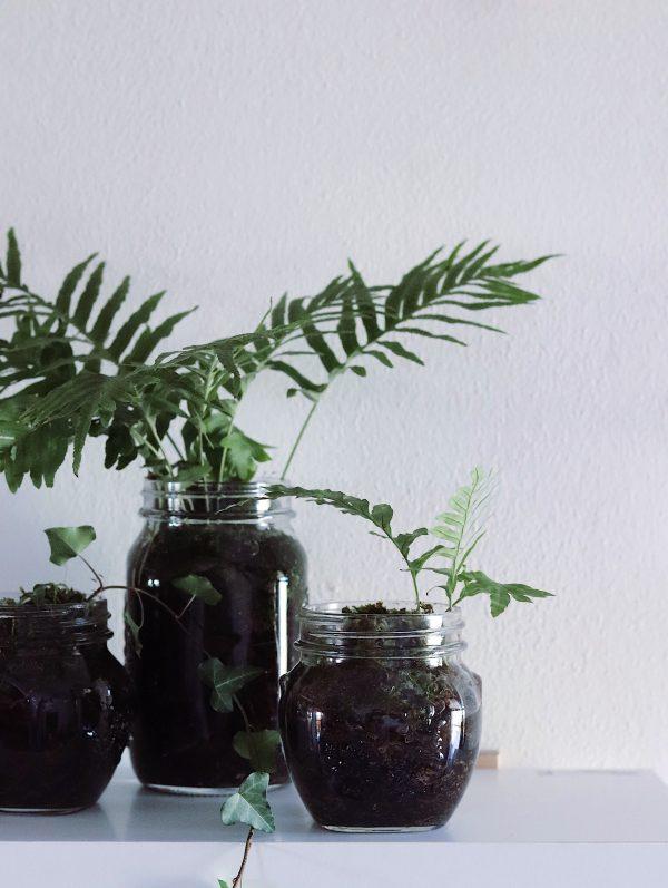 5 cose da fare a febbraio e un piccolo tutorial verde