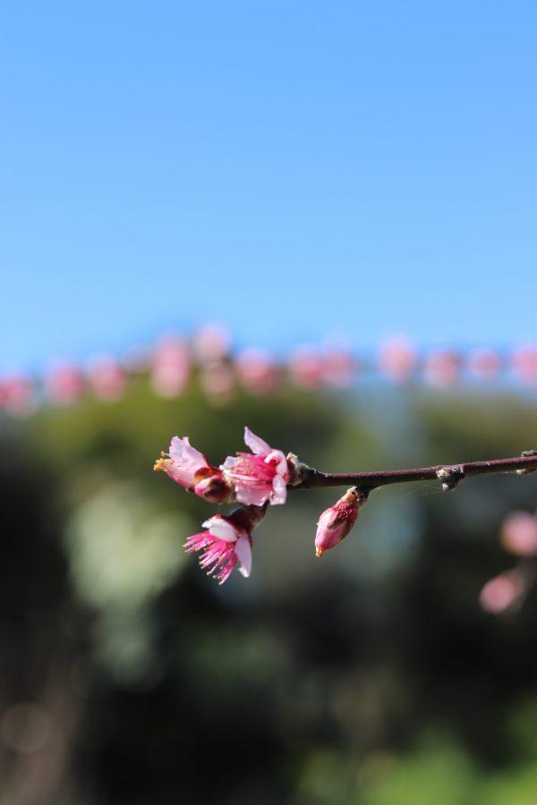 Primavera, donne e buoni propositi