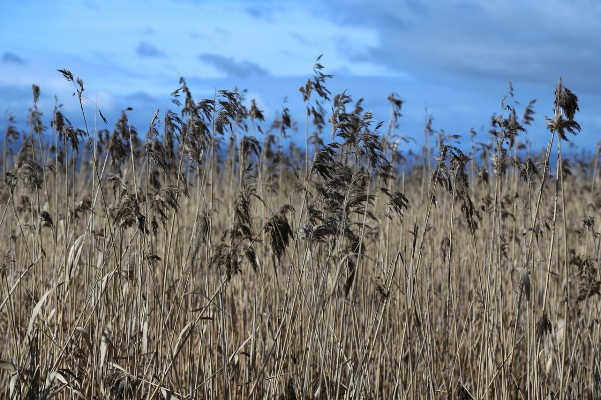 The wheat and weeds in my heart
