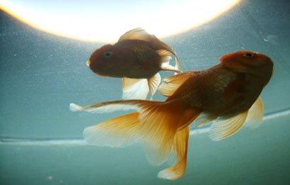 fishes - photo