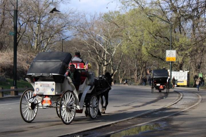 centralpark_nuevayork_usa_Central Park (4)