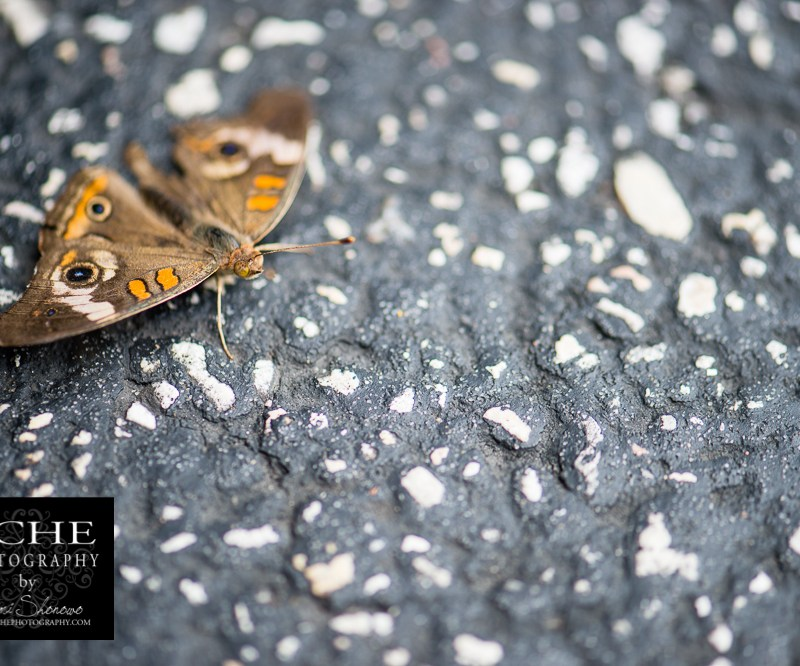 {day 144 project365 2015… asphalt moth}