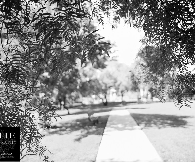 {day 127 project365 2016… path to play}