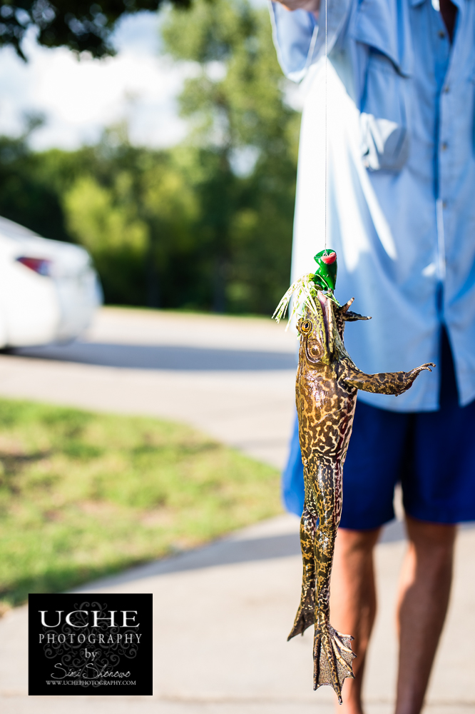 {day 241 project365 2016… bullfrog caught}