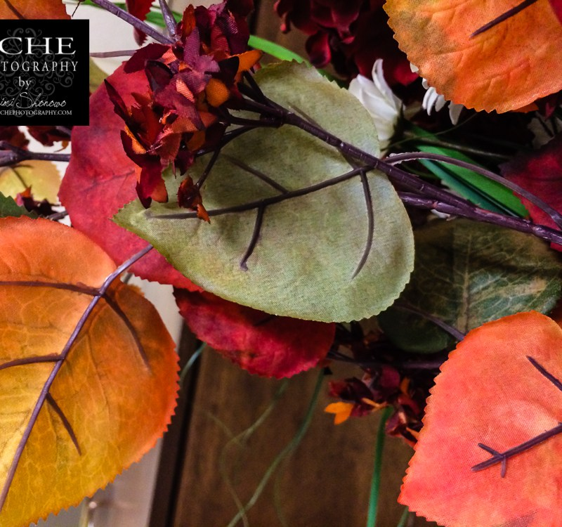 {day 290 mobile365 2016… fall colors}