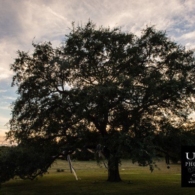 {day 296 project365 2016… wedding sunset tree}