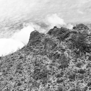 Saguaro cacti on a peak near Gates Pass, Tucson Mountains.