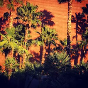 Palm trees and brick on the University of Arizona campus.