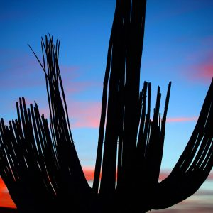 Saguaro skeleton against another majestic desert sunset.