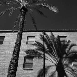 Palm tree and the shadow of palm tree on the University of Arizona campus.