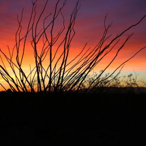 Ocotillo sunset near the Whetstone Mountains southeast of Tucson.
