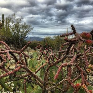 Prickly pear and cholla between summer storms.
