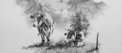 Vaches et Dent de Broc <br/> 40 x 40 cm <br/> Crayons gris sur fond blanc