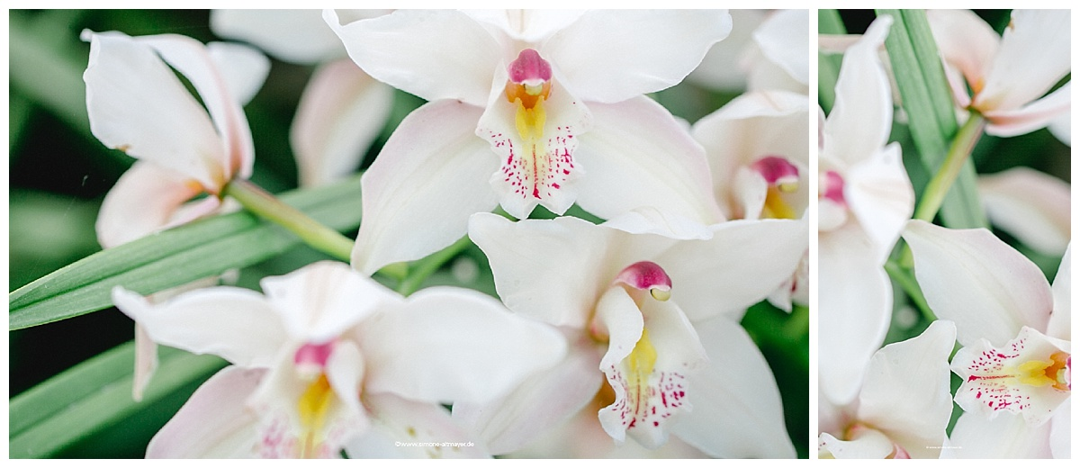 wallpaper, september orchidee