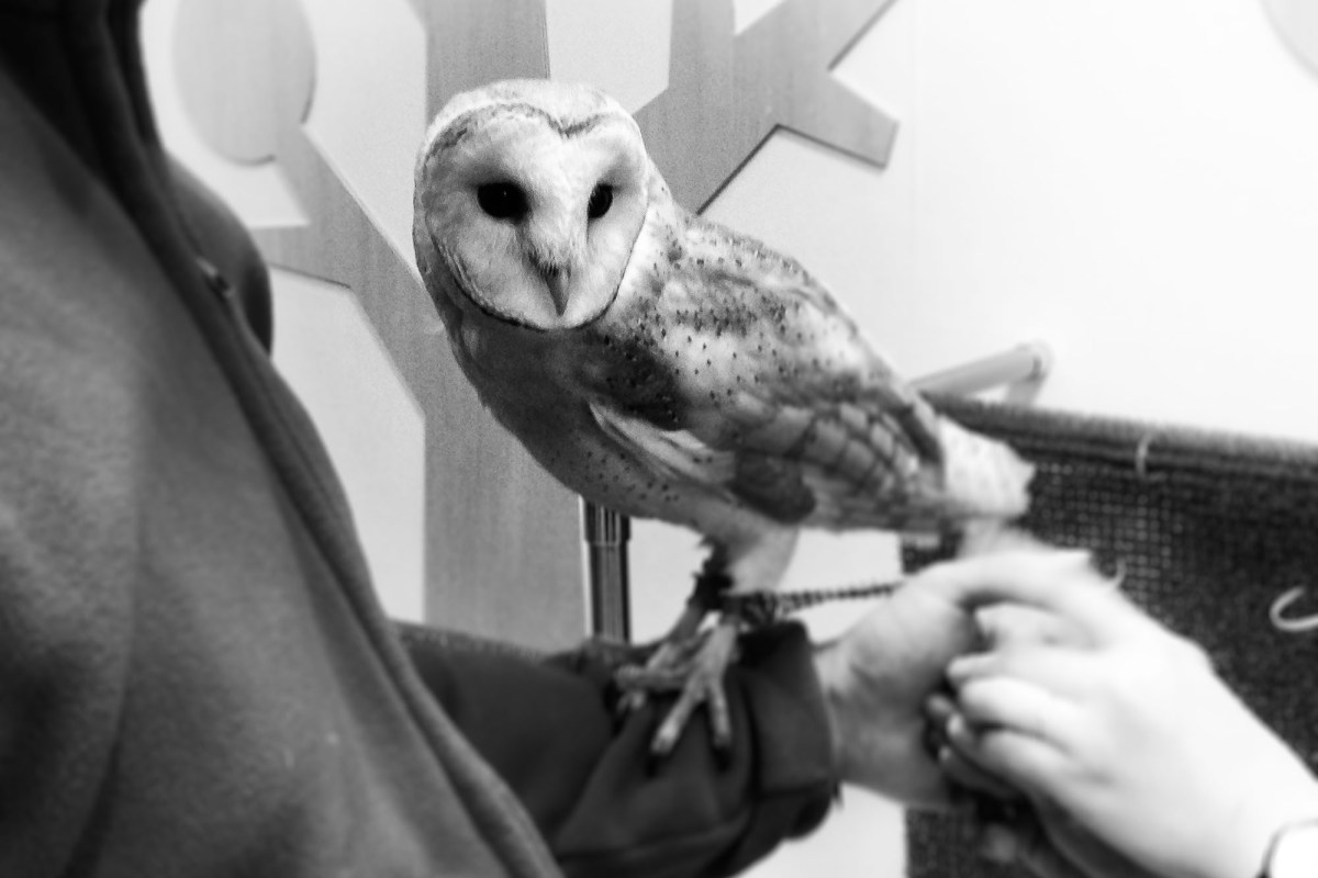 To Give, or Not to Give a Hoot: Japan's Owl Cafes