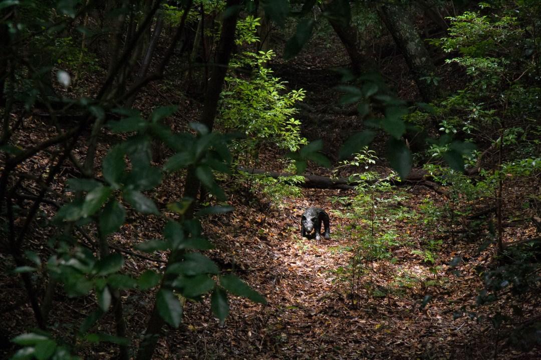 A Walk with the Dog, Hiroshi Fuji, 2000