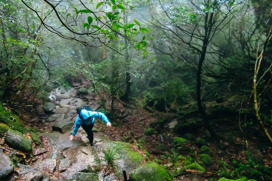 Kusugawa Trail (Photo by Austin Berry)