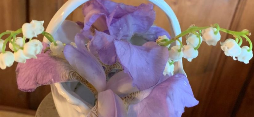 iris muguet