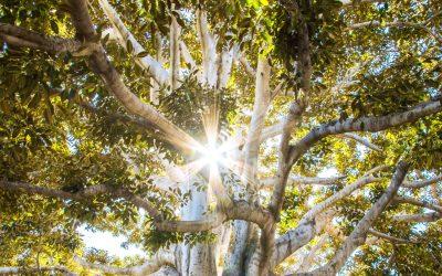 L'albero della vita: la  via per diventare veramente immortali