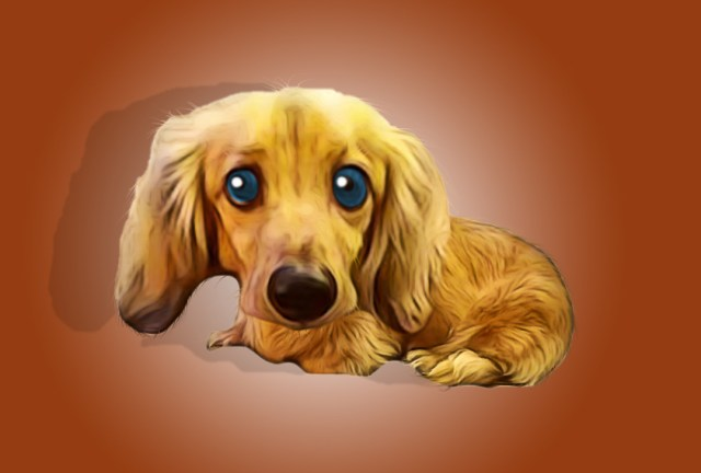 Pet Caricatures